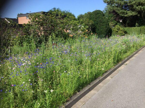 Wildblumenwiese-D-Laerchenweg-13
